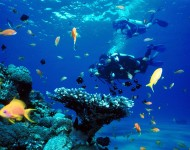 巴厘島駕駛員水上運動,潛水