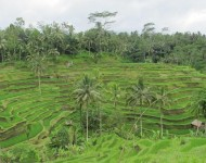 bali-tour-package-3h-2m-04