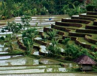 bali-tour-package-5h-4m-08