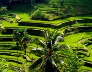 bali-tour-package-6d-5n