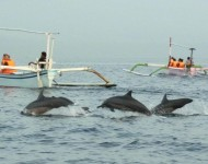 bali-tour-package-dolphin-03