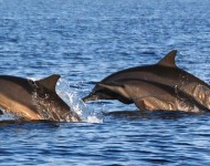 bali-tour-package-dolphin-04