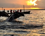 bali-tour-package-dolphin
