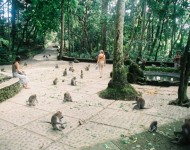 bali-tour-package-monkey-02