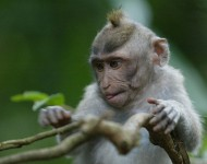 bali-tour-package-singe-03