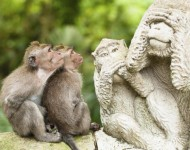 bali-tour-package-singe-04